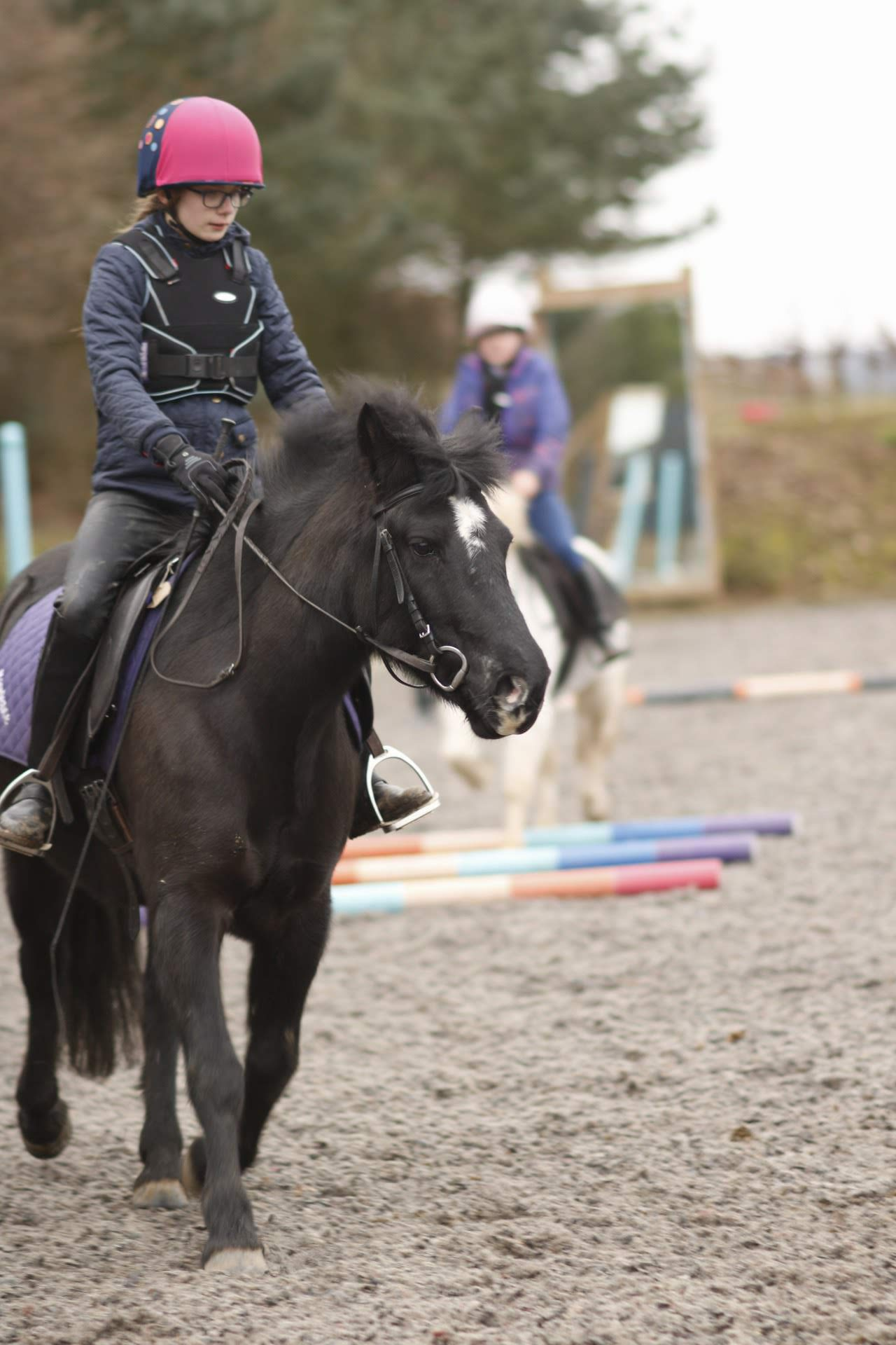 Buttons - black dartmoor hill pony