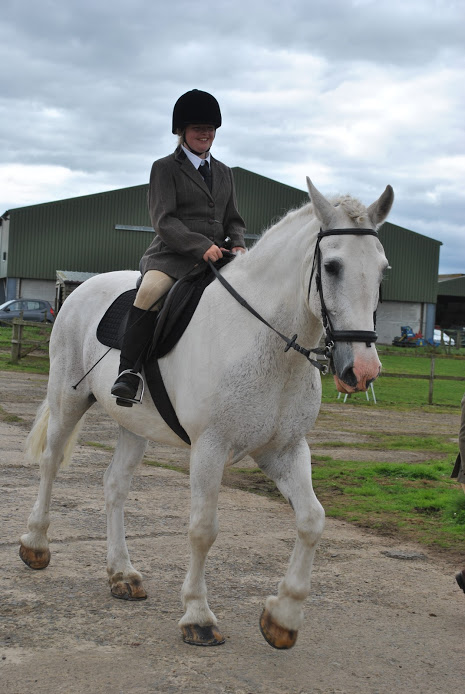 Shadow clydesdale irish draught